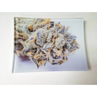 Shatter Resistant Premium Glass Tray